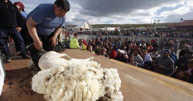 Más de 4 mil personas en primera jornada de la Fiesta de la Esquila