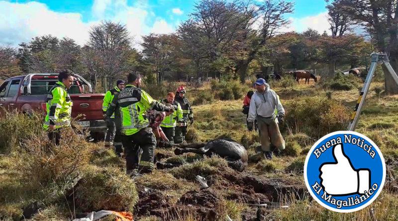 Bomberos rescató a yegua que quedó atrapada en un pozo