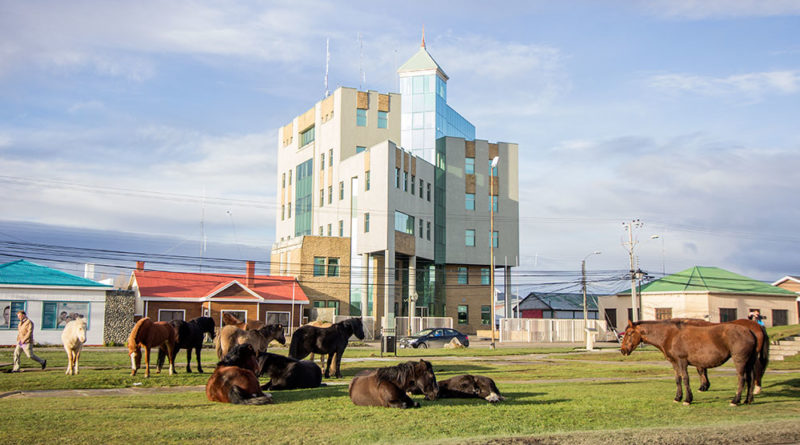 Alcalde solicitó al Sag que fiscalice a dueños de caballos que circulan por la ciudad