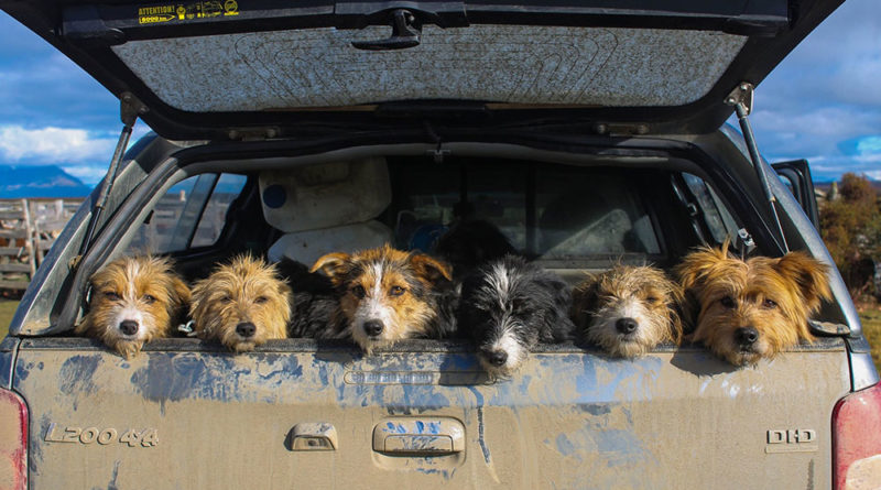 Enternecedor retrato de perros de arreo ganó premio fotográfico de Sernatur